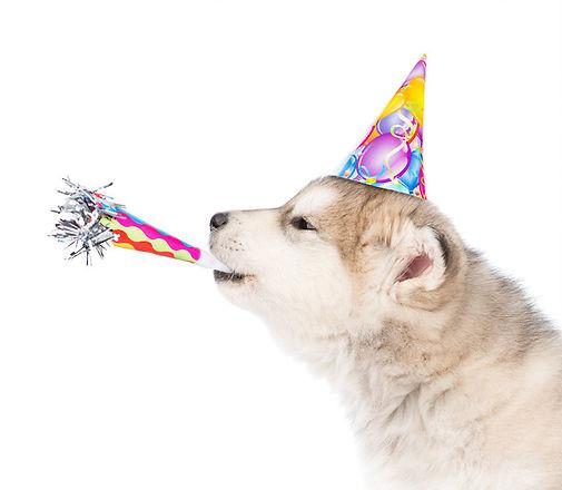 birthday wolf.jpg