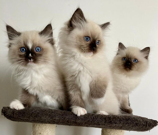 Trio irresistible.jpg