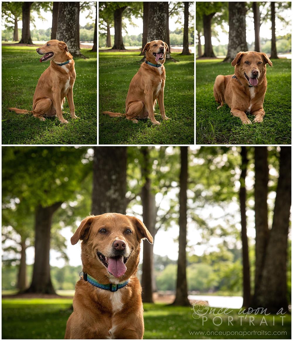 Furman University family portraits dog pet puppy good boy lake green