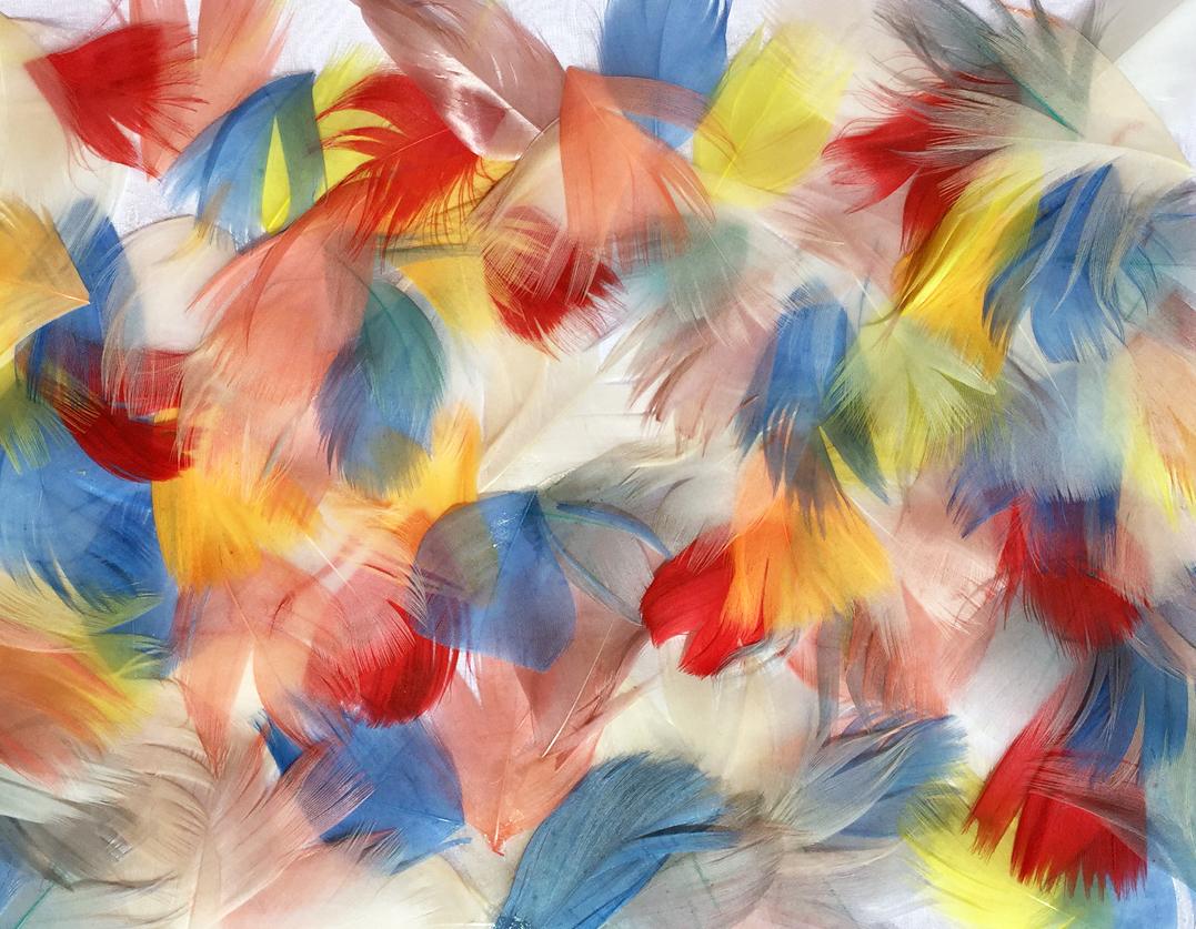 Multicolor goose feathers