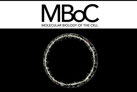CARLOS PATINO DESCOVICH PUBLISHES IN MBOC