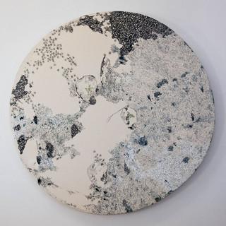 1. Lichens sur rocher.jpg