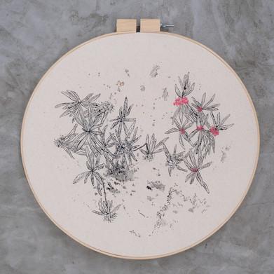 Série Flore boréale