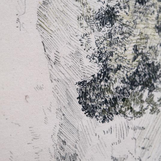 Lichen/glace/pierre détail