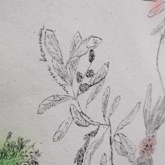 Flore boréale (détail)