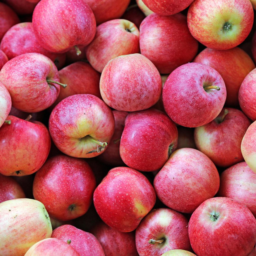 background of big ripe beautiful red app