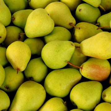 Fresh yellow and green pears background.