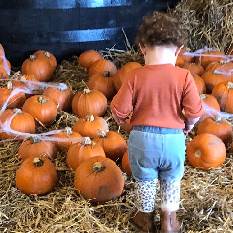 All Hallows Family Disco & Pumpkin Carving