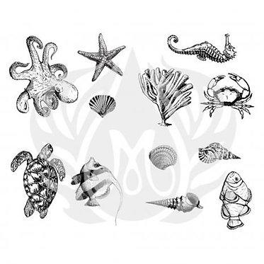 DSS 0131 Sea Life
