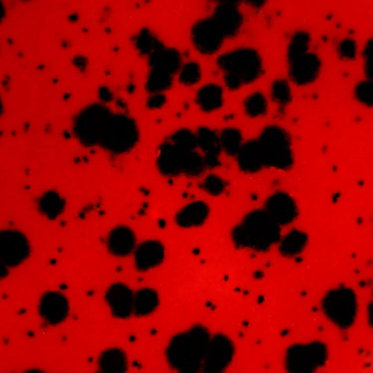 Ladybug CG-984  -   118 ml