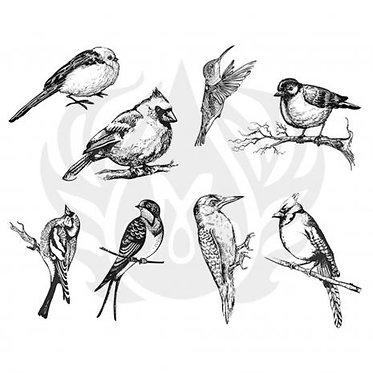 DSS 0108 Aviary small birds