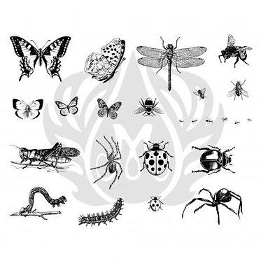 Bugs DSS0113