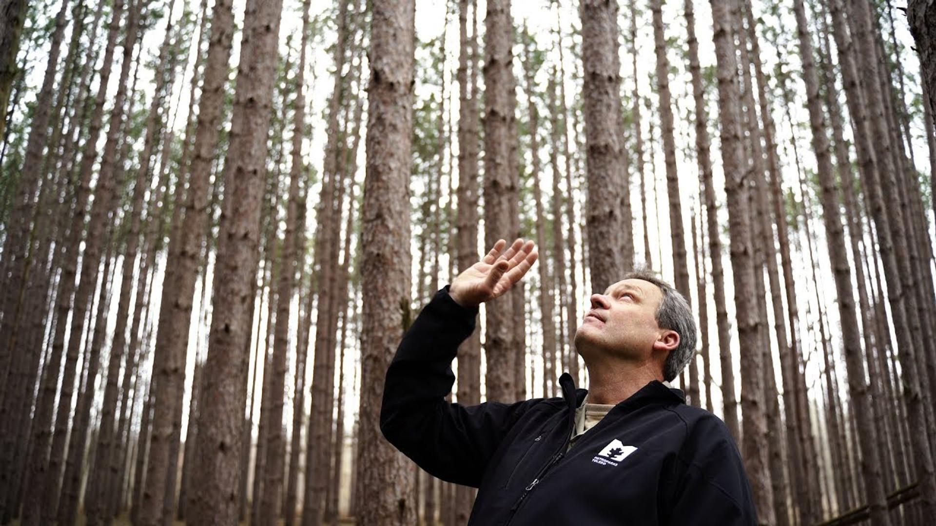 Toledo Metroparks   Oak Openings Pine Management Update
