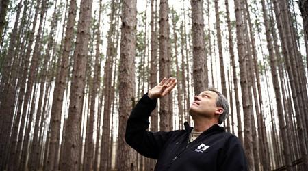 Toledo Metroparks | Oak Openings Pine Management Update