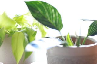 乳がん手術前写真撮影スタジオ、ブレストキャンサーポートレートの観葉植物