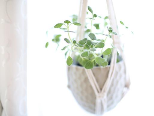 ブレストキャンサーポートレートのフォトスタジオでは、アロマの香りがする観葉植物が皆さまをお待ちしていますよ