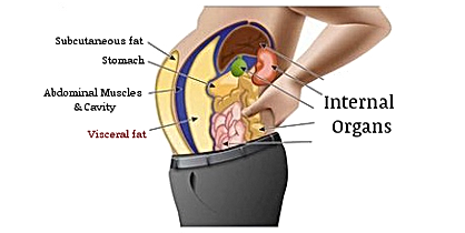 Visceral Fat.png