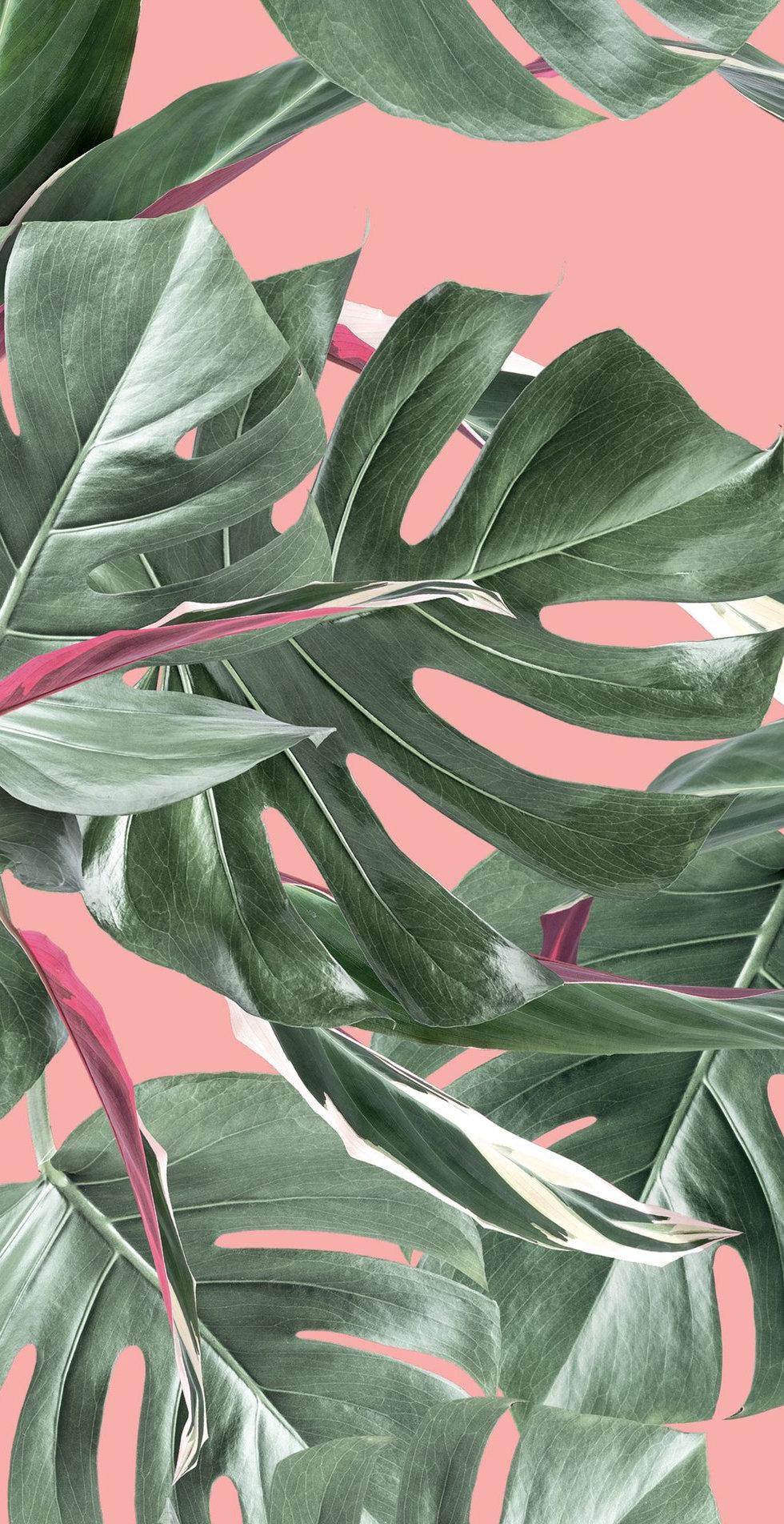 Botanical_Wallpaper_Monstera_Pink_by_KEK
