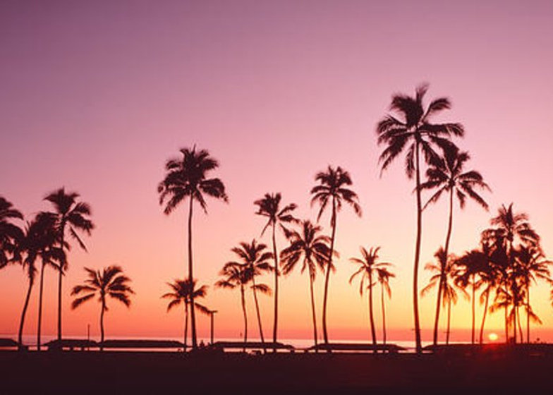 sunset-palm-trees-oahu-island-hi-usa-pan