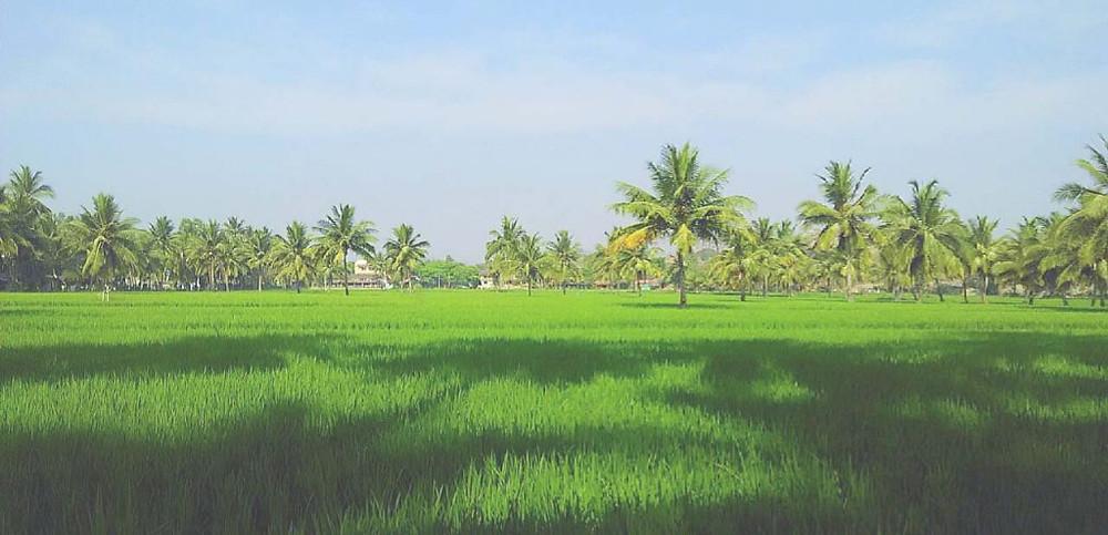 Hippie Places in India | Hippie island Hampi