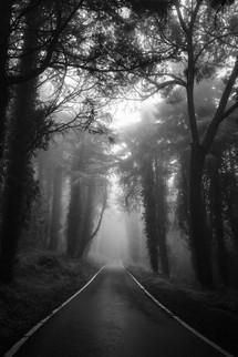 Foggy Lockdown