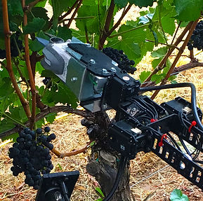 Robotic harvesting with Digital Harvest