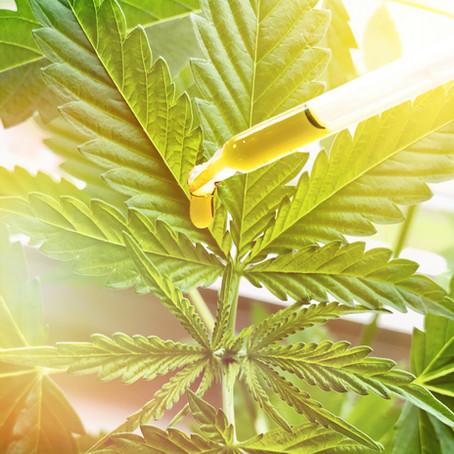 Does Cannabis Kill Cancer?