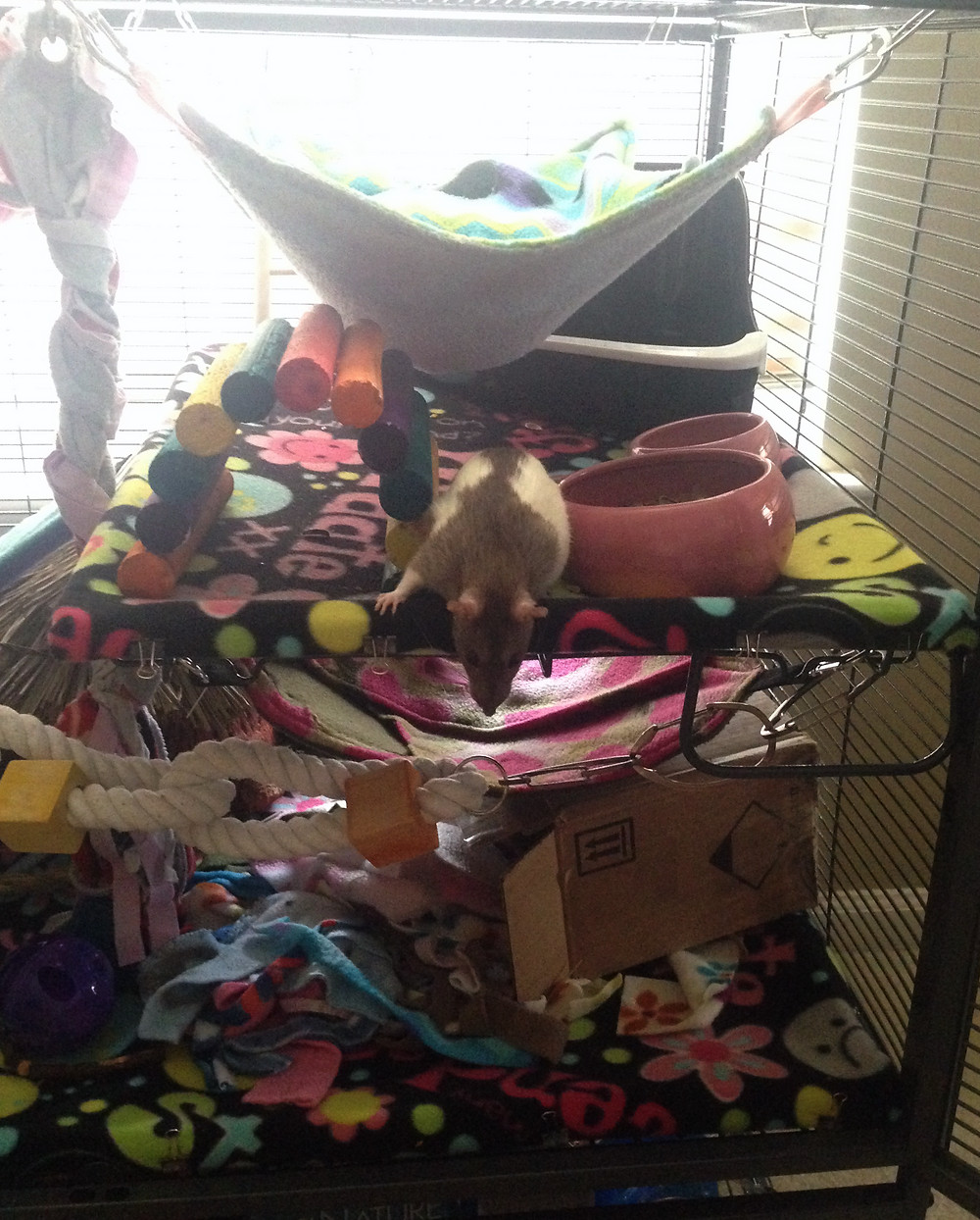 Rattie Nonnie's first time in her new Critter Nation cage.