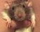 Meet My Pet Rat Mylo!