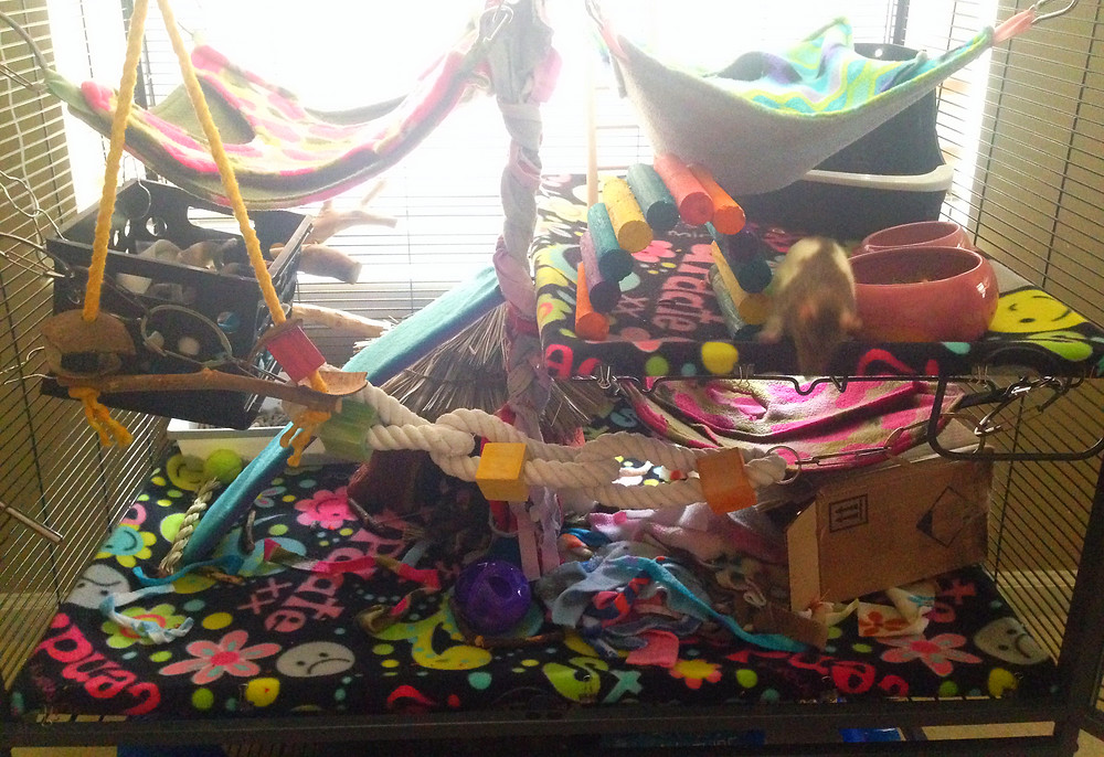 The new cage setup with fleece rat hammocks, fleece scraps, and lots of toys to keep them busy.