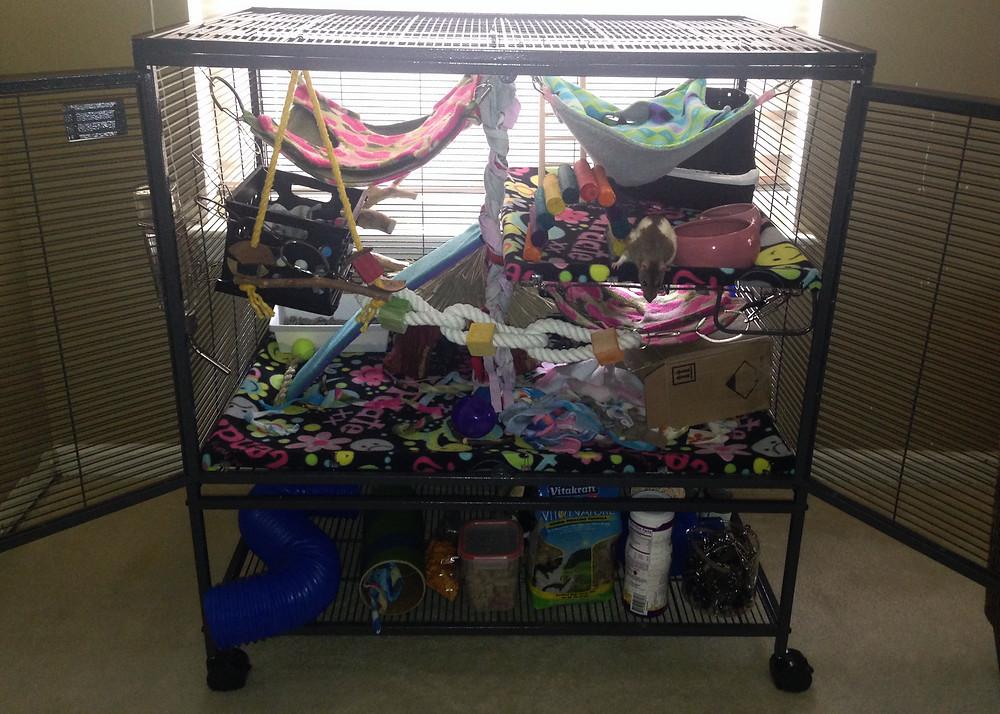 Three fleece rat hammocks, ropes, a grass hut, cardboard box, fleece scraps, food dishes, and three litter boxes.