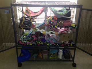 Product Review: MidWest Homes For Pets Critter Nation Cage for My Pet Rats