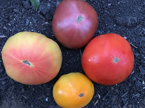 Plant Sale: Heirloom Tomato Mix