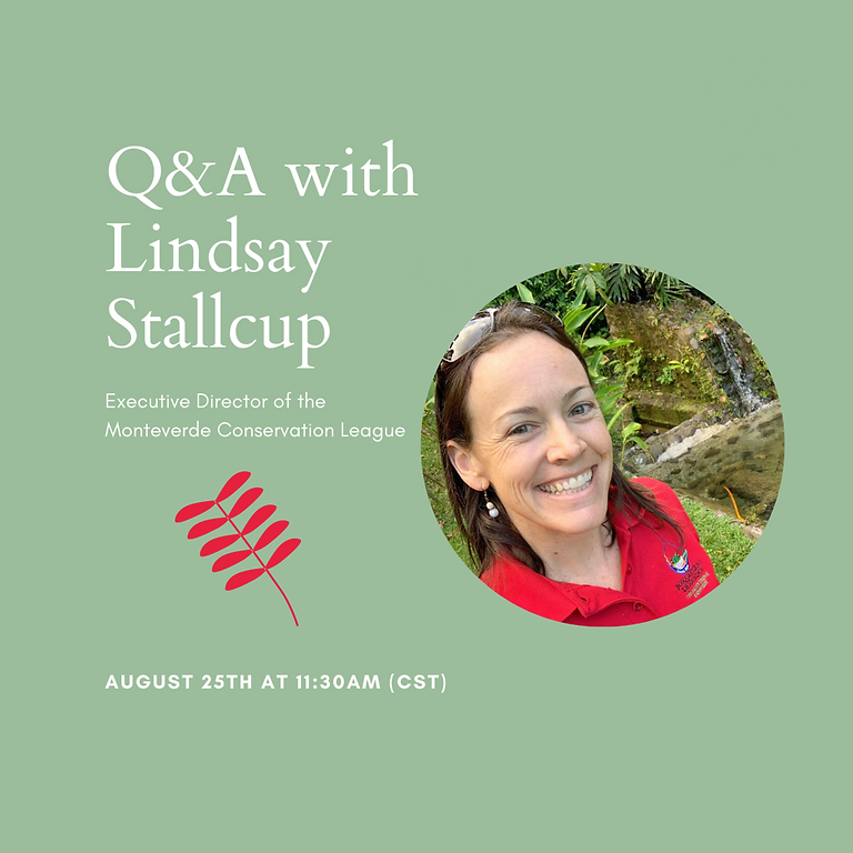 Q&A with Lindsay Stallcup