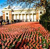 Poppies at Menin Gate.jpg
