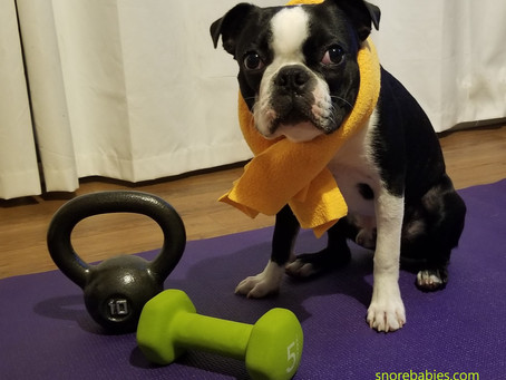 6 Exercises To Strengthen Your Dog's Legs