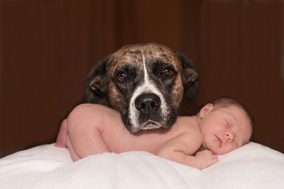 Dog with sleeping infant