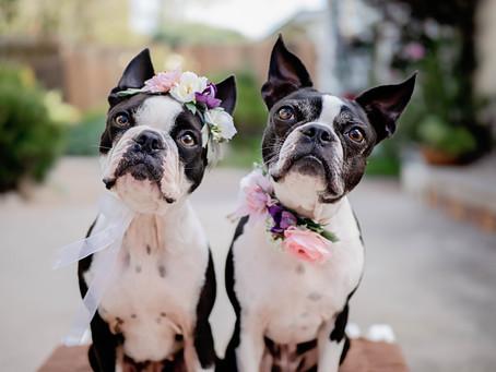 Fun Names for A Dog Pair