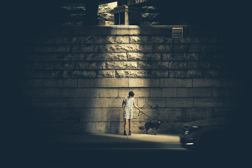 Dog standing under light on dark street