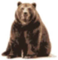 Opit Bear.jpg