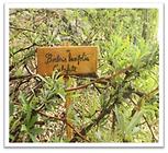 foto jardín estepario, plantas locales