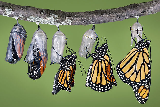 butterfly-10-orig.jpg