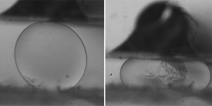 バイオマテリアル・生体サンプル強度測定