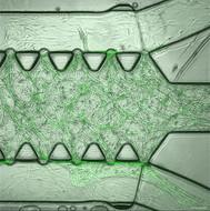 BF green comp.jpg