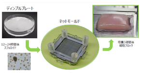 New product/ 3D culturing kit