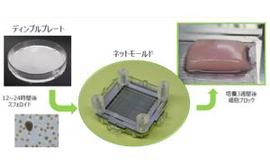 薄膜フィルムと反ダブルネットワーク二層膜の経口ドラッグデリバリーシステムの比較