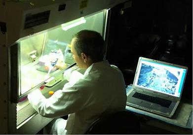 蛍光顕微鏡による培養細胞観察例2
