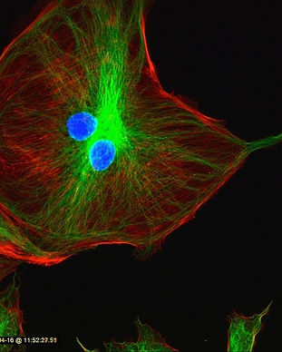 蛍光顕微鏡の機能