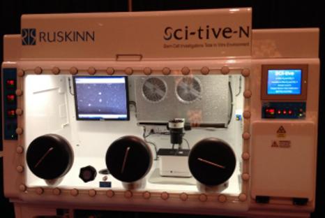 蛍光顕微鏡による培養細胞観察例3