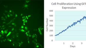 エタルーマ社 LumaScope 小型蛍光顕微鏡:新しいイメージ解析用ツール